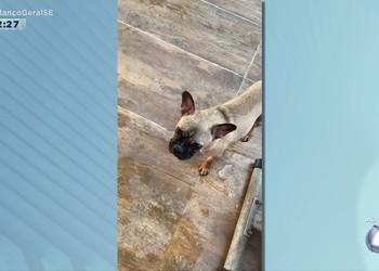 Tutora de cão desaparecido oferece recompensa de R$ 5 mil