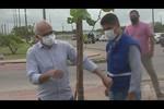 Aracaju Mais Verde: capital vai receber mais de três mil mudas de árvores