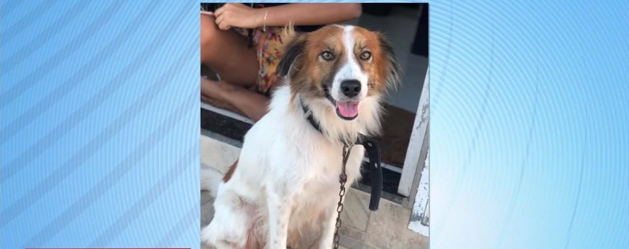 Cachorro é morto a tiros em Pedra Mole; motivação teria sido vingança